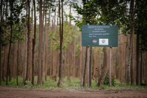 Tecnologias das floresta: manejo e poda