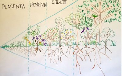 Tecnologias da floresta: sucessão natural das plantas