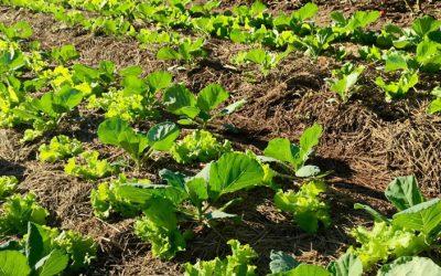 A agricultura orgânica ainda mais perto de alimentar o mundo todo