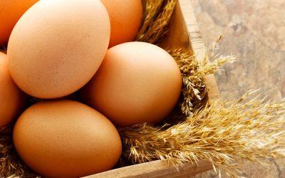 A força que existe nos ovos