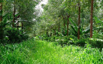 RIZOMA: Uma empresa que irá mudar o paradigma da agricultura