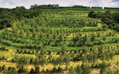 Fazenda da Toca: Um case internacional no combate às mudanças climáticas
