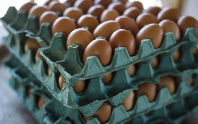 Saiba como o ovo saiu da condição de vilão a herói da alimentação saudável