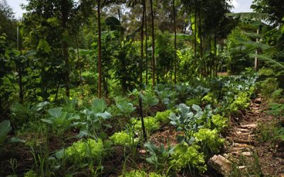 Ensinamentos de uma horta agroflorestal