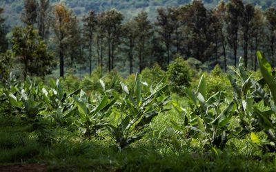 Fazenda da Toca terá dois cases apresentados no Congresso Mundial de Agrofloresta em maio na França