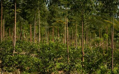 É possível alimentar o mundo com orgânicos?